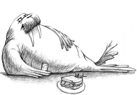 Walrus drawing easy - photo#28