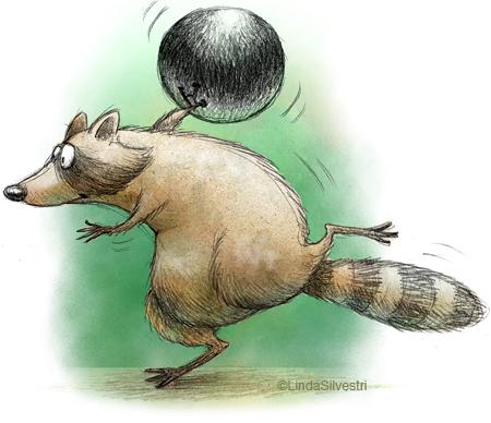 raccoon2_rev