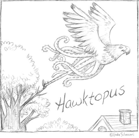 hawktopus 2