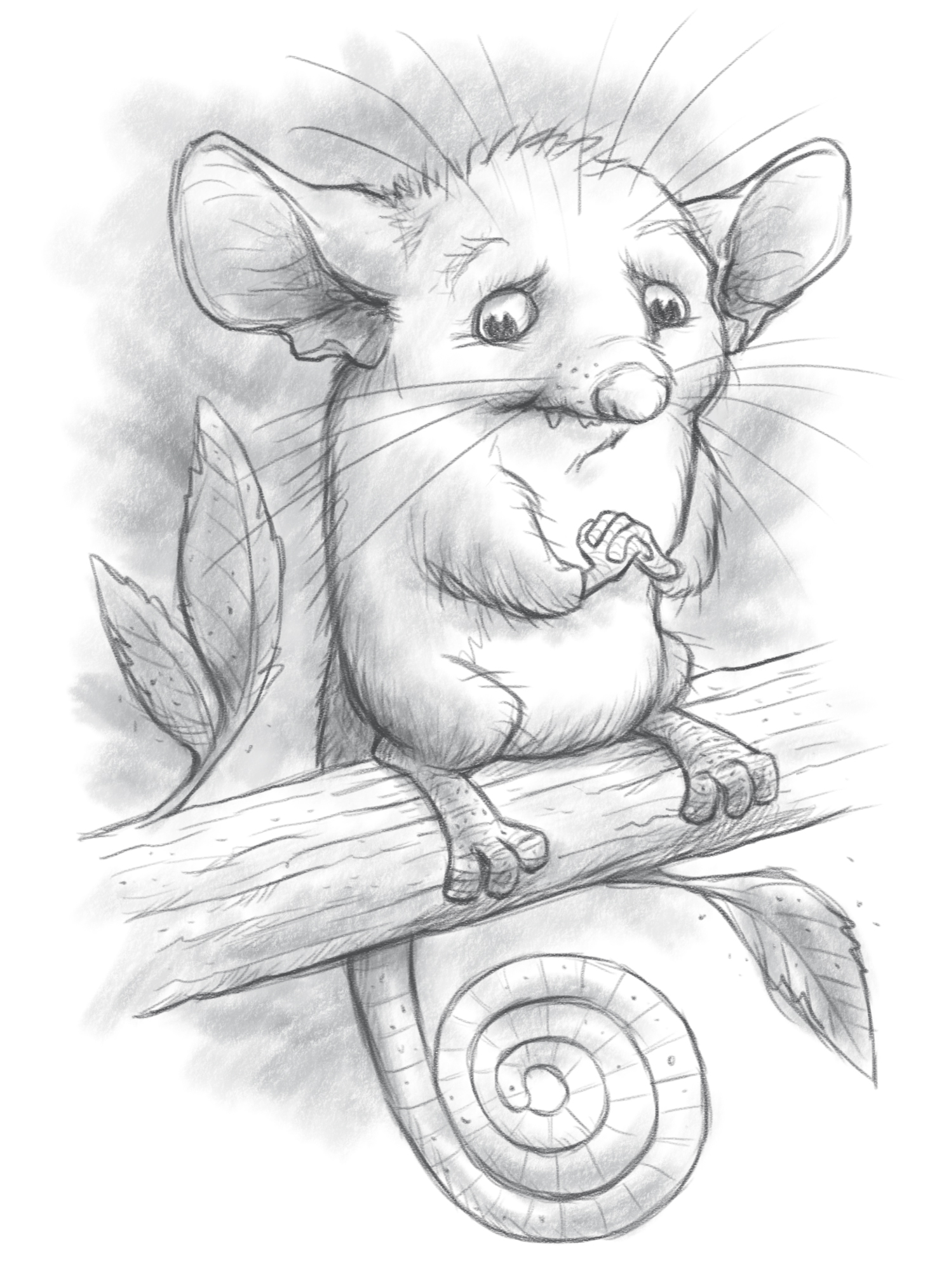 Uncategorized Possum Drawing pygmy possum sketched out sketches