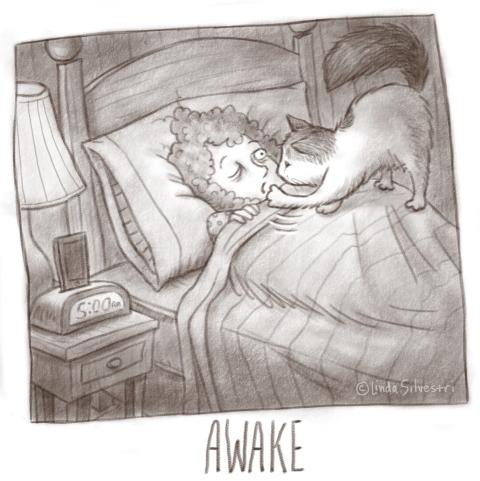 awake skadamo 2